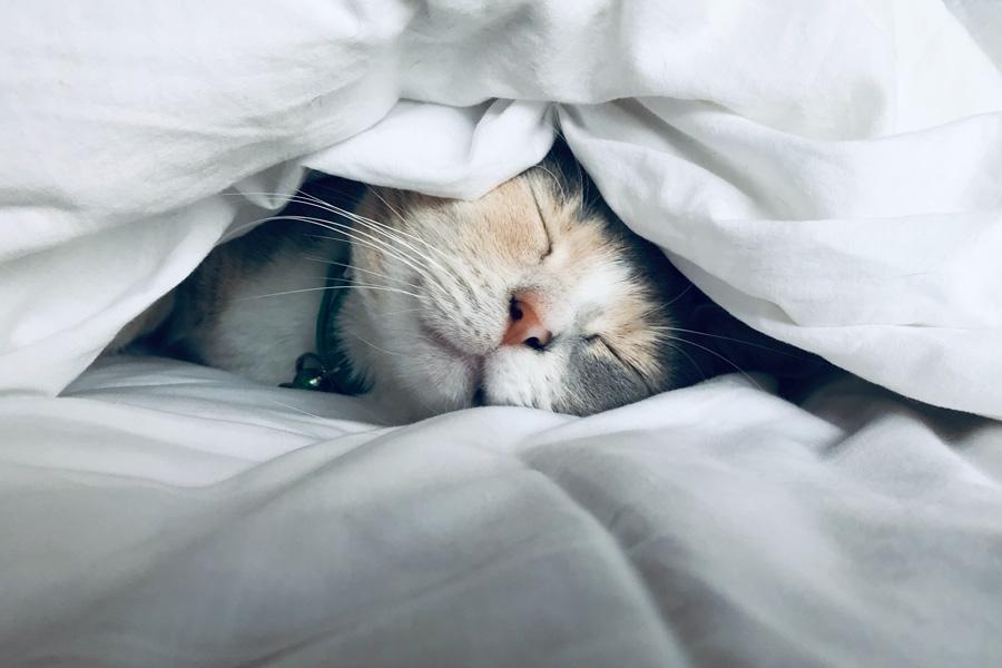 truco para dormir mejor como un gato