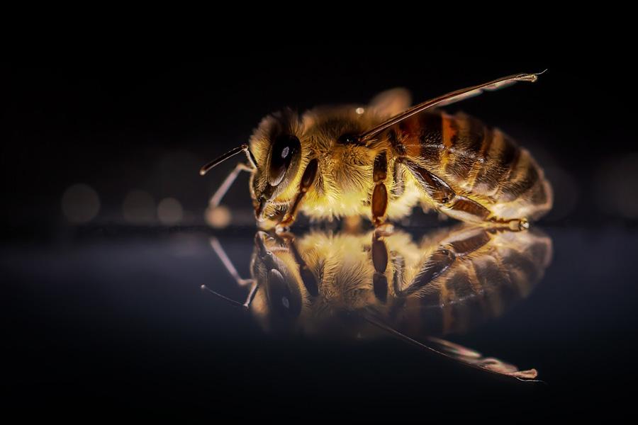 Jalea Real un superalimento para las abejas. ¿También para los humanos?